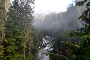 """Much of the area surrounding Vancouver is classified as """"rain forest"""""""